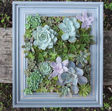 گیاهان خانه های مدرن, گیاهان مناسب خانه های مدرن