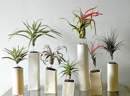 گیاهان مناسب خانه های مدرن, گیاهانی با سبک های مدرن خانه
