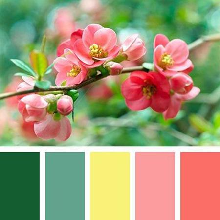 چیدمان صورتی رنگ مناسب خانه,دکوراسیون صورتی